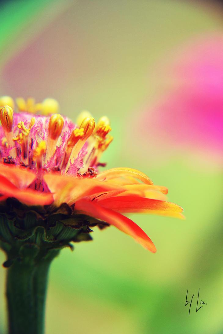 Flower by LizAlasca