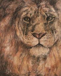 Lion by MaboroshiTira