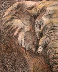 Elephant by MaboroshiTira