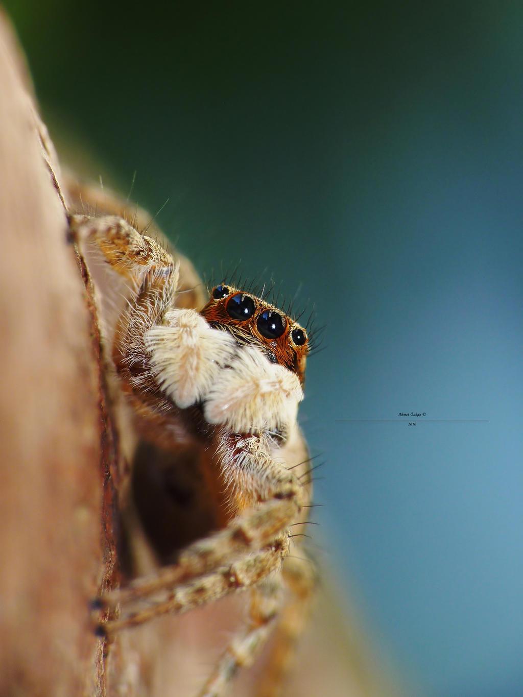 Spider-man pose hanging by Metkan