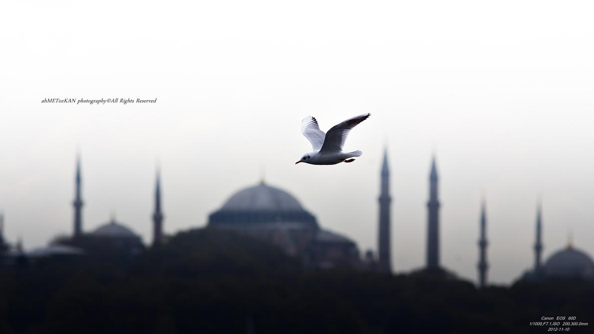 City under my wings by Metkan