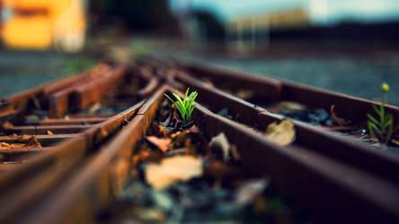 Train by carloszc10