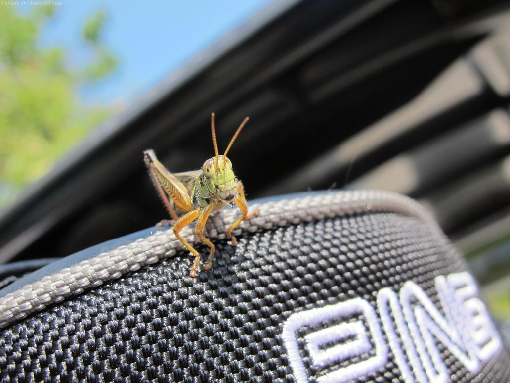 Gonna Hop! by PkGam