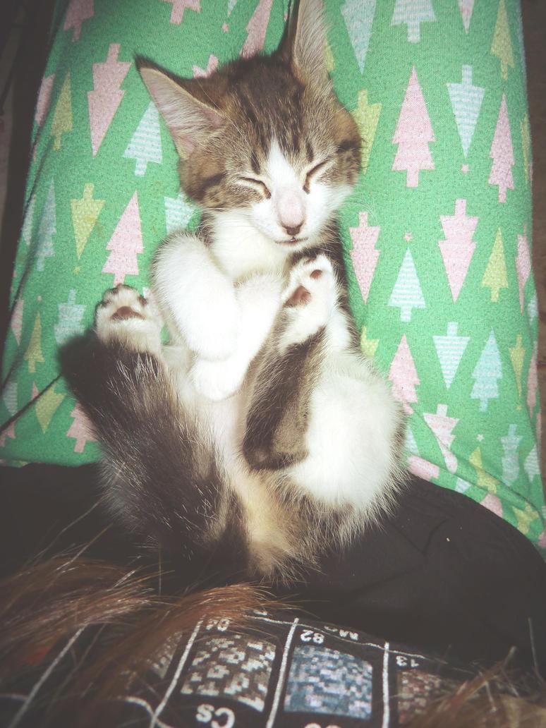 Foster Kitten by Neon-Frost