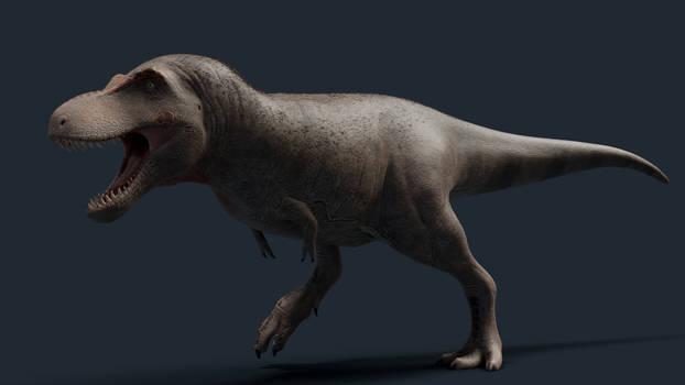 New Tyrannosaurus Rex Model