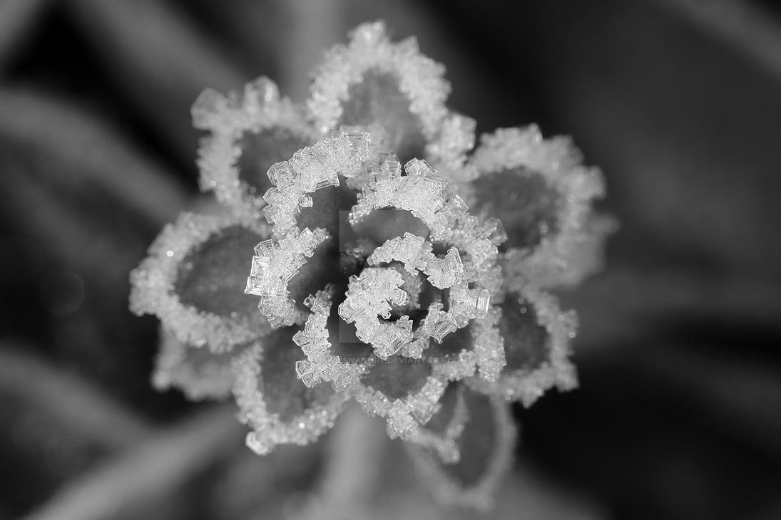 Frosty Mornig 13-12-2016 006 by swissnature