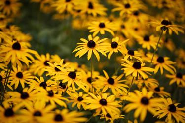 Flowers 25-08-2020 002