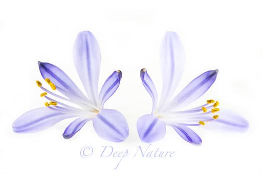 Flower Macro 23-04-2021 003