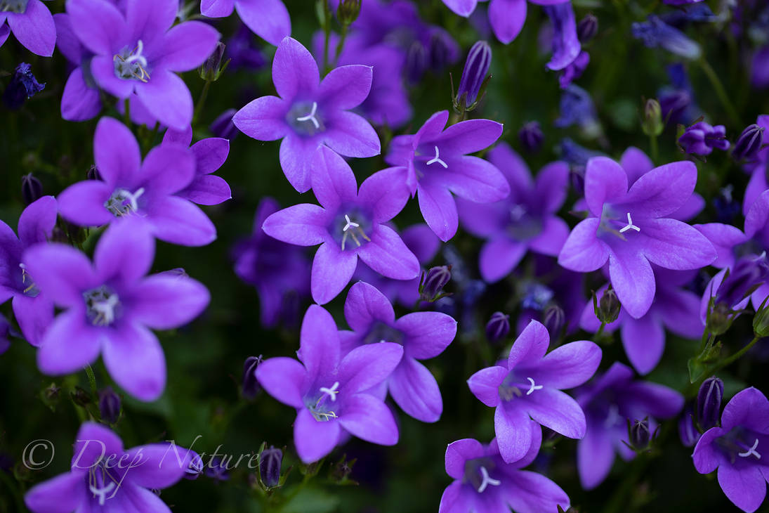 Flowers 31-05-2021 016