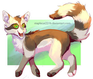 Racoontail