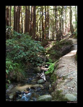 Stream of the Redwoods