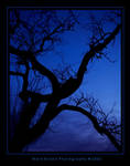 Deep Blue II by Kvaga