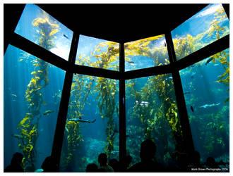 Kelp Forest by Kvaga