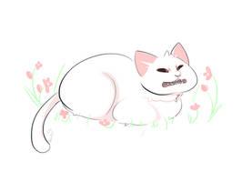 Cringe Face Cat