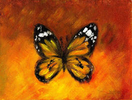 Fragile Butterfly by Petra-
