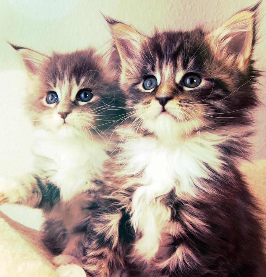 Kitten by Fantasize-Me-R93
