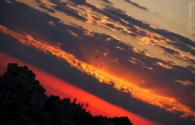 birds with sunrise