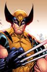 Savage Wolverine colors by Alonso Espinoza