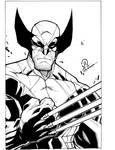 New Wolverine
