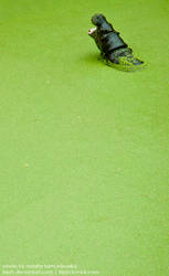 Pygmy hippo in the green by iisjah