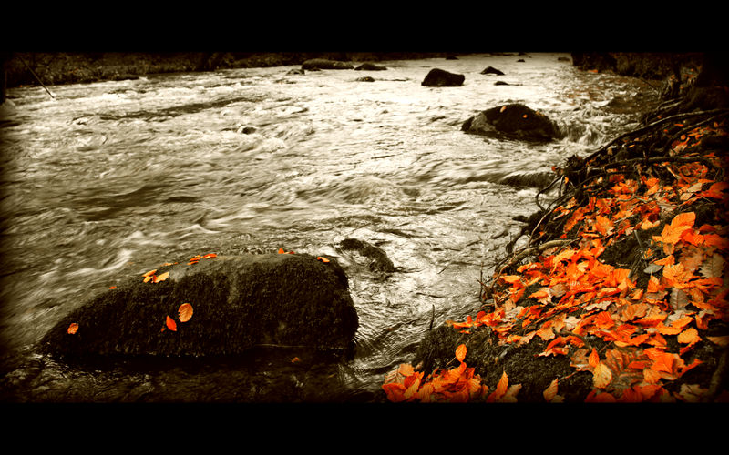 Signs of Autumn Wallpaper by salmanarif