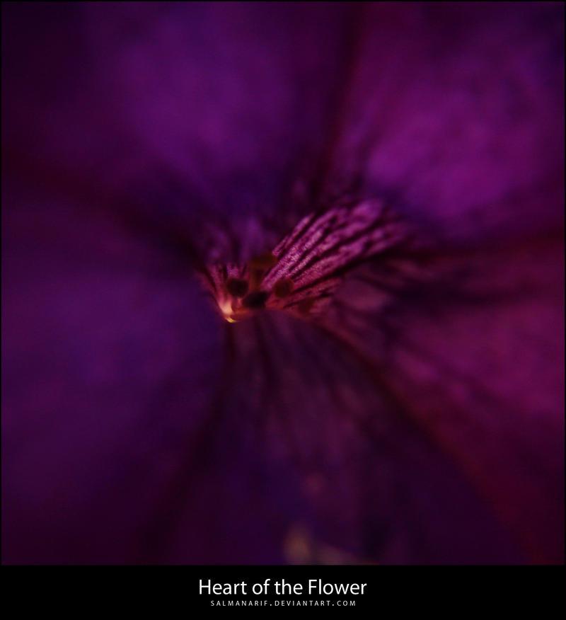 heart of the flower by salmanarif on deviantart, Beautiful flower