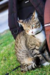 Cat Love by boraakbay