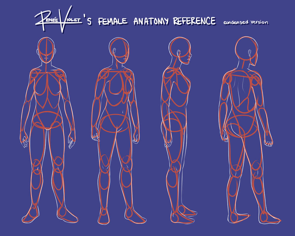 Female Anatomy Reference Condensed Version By Reneeviolet On