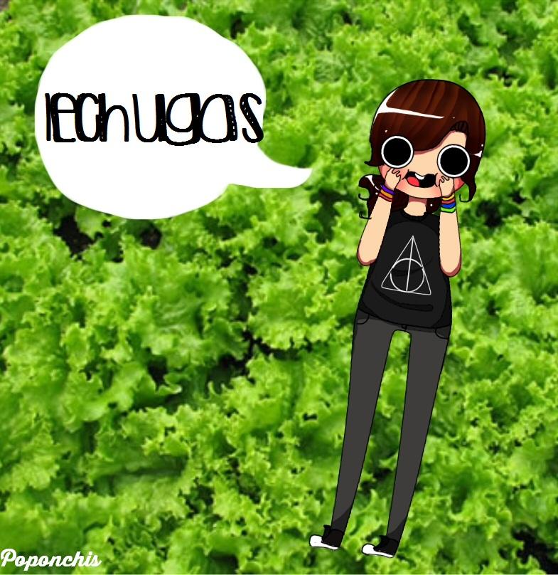 Lechugas!!! by Poponchis