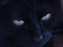 Happy Black Cat Halloween by darkelvenmage