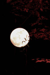 Werewolf's Moon Again