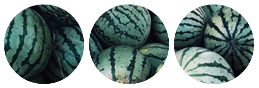 +Watermelons+