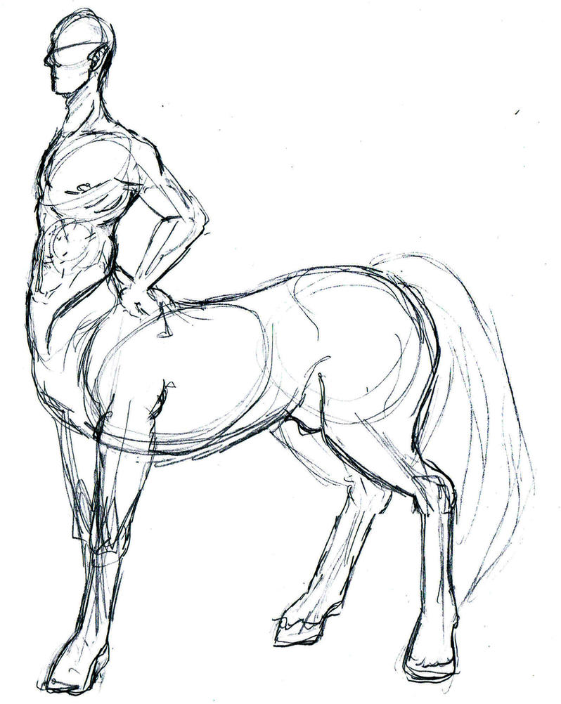 Centaur anatomy reference by wolf-wishes on DeviantArt