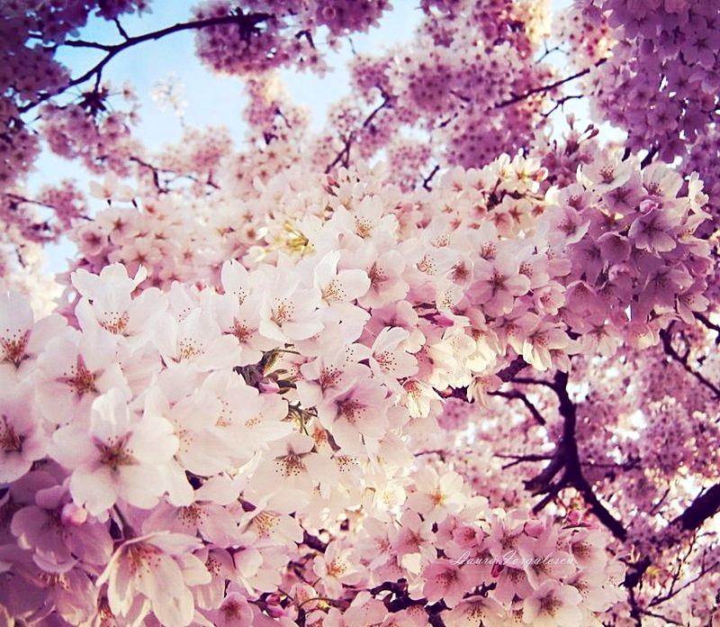CVECE Spring__by_loLO_o