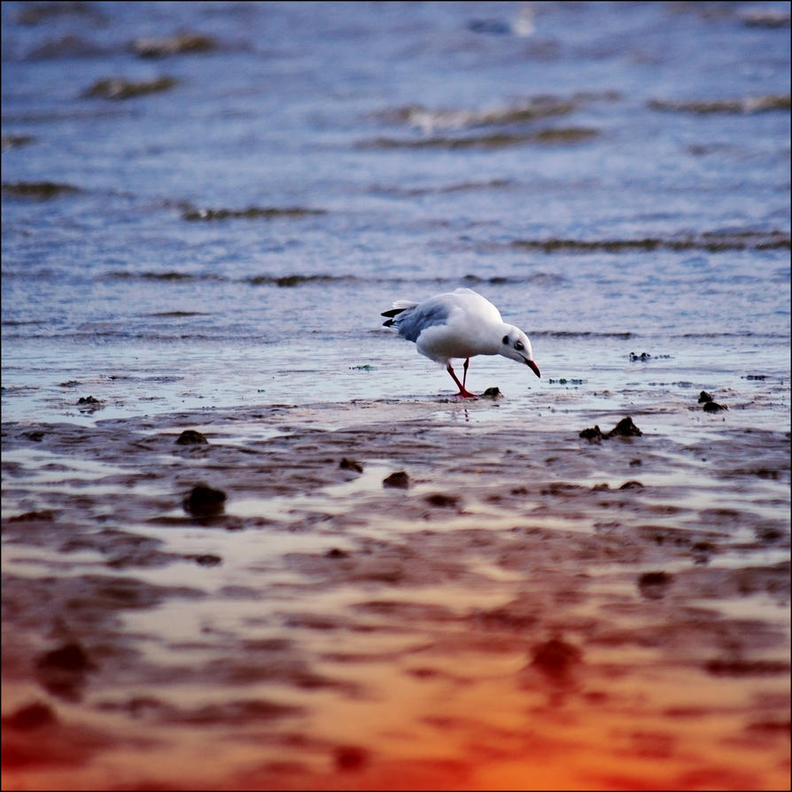 Seagull memory by loLO-o