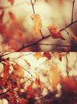 Fall by loLO-o