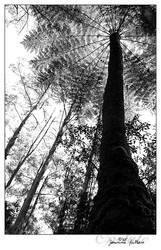 Fern giant by opelate