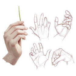 Hand Study by Opeiaa