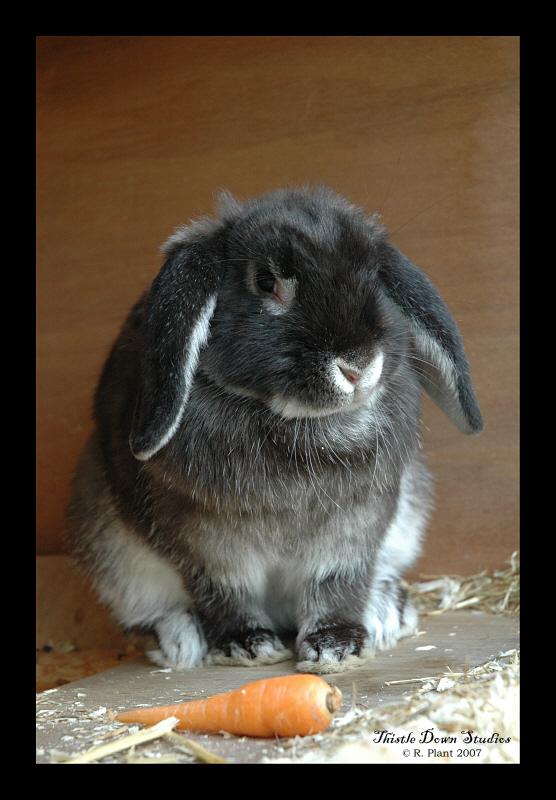 Bramble by Rosie-the-rabbit