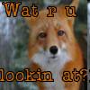 Curious Fox by xxSecretxx