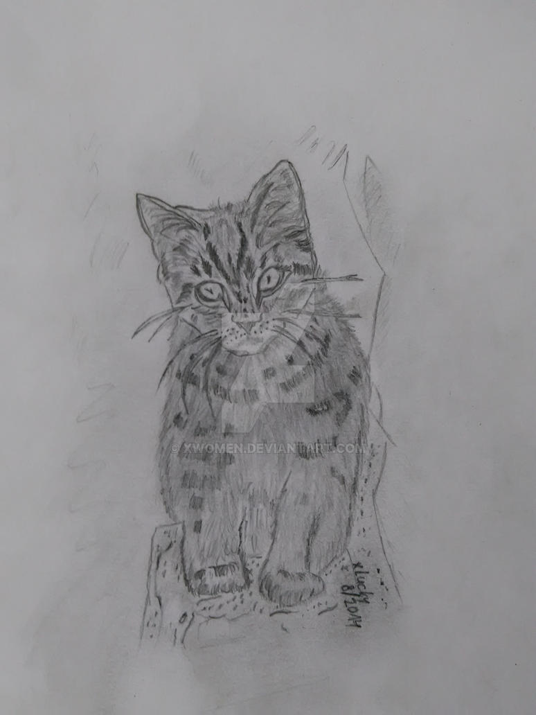 pencil drawing - cat by xwomen
