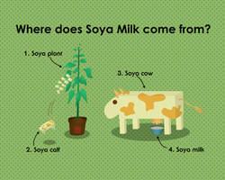 Where does Soya Milk come from