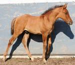 098 : Foal Walk