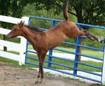 101 : Foal Kick