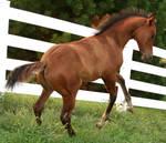 105 : Foal Rear