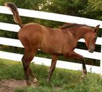 106 : Foal Strike