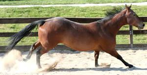 044 : Gallop Slide