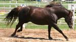 046 : Gallop