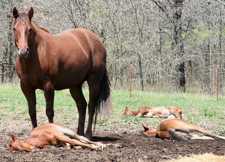 052 : Foal Massacre