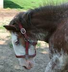 076 : Foal Close-Up
